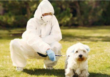 perros podrían detectar el coronavirus