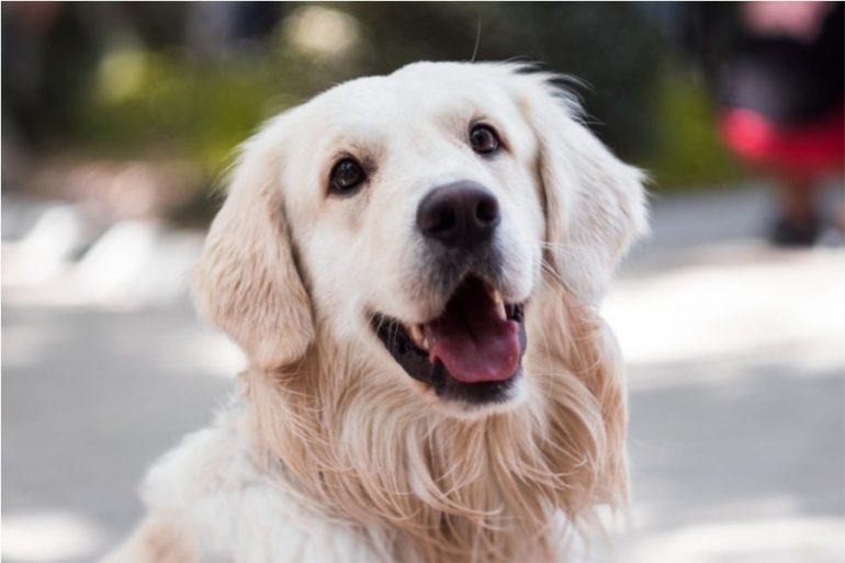 perros pueden identificar la maldad