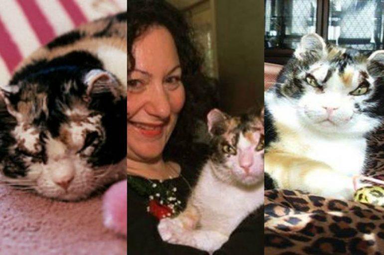 Gatos y el origen de Karen