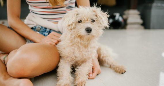 test porcentaje dog lover