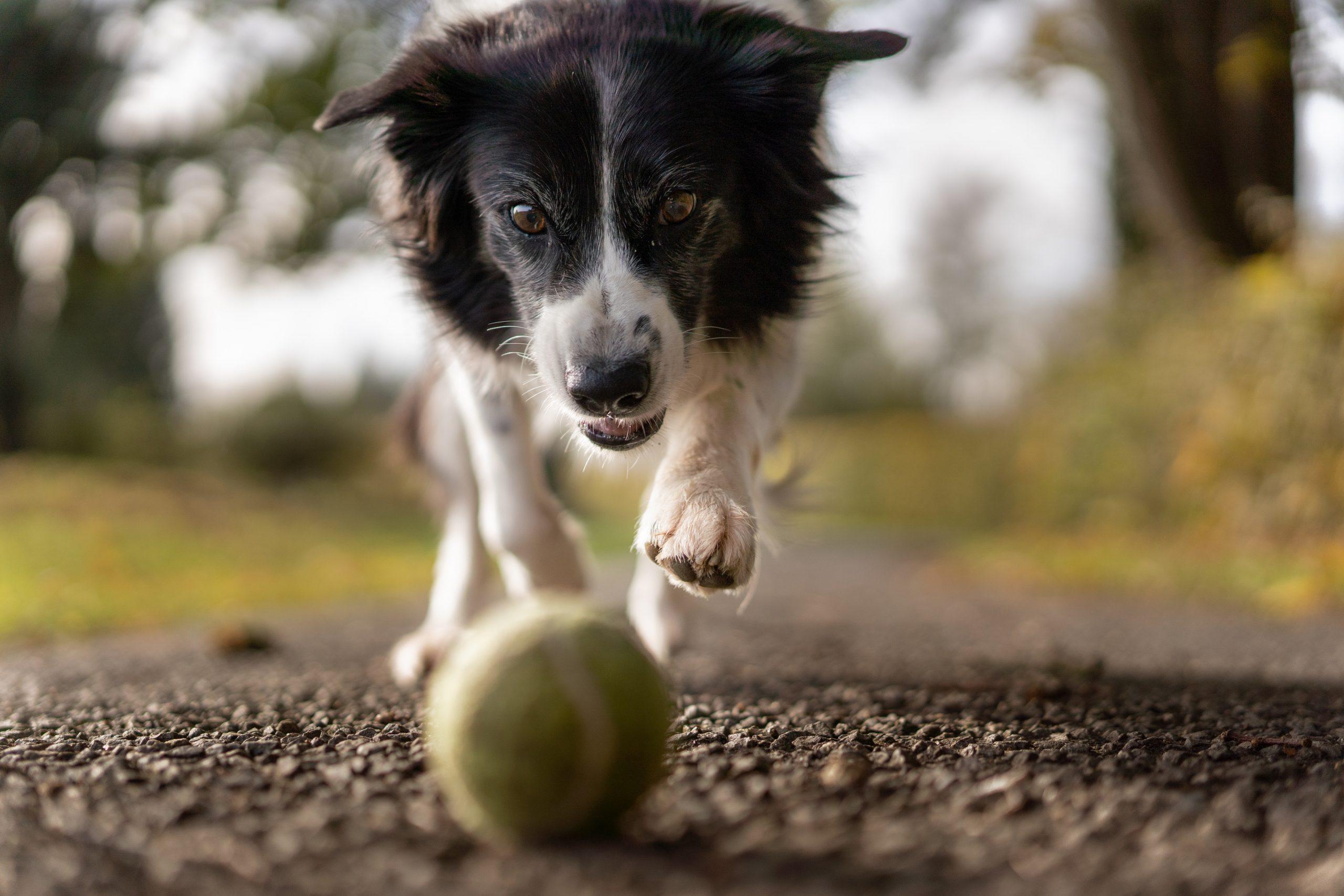 beneficios tener perro en casa
