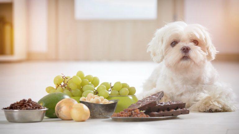 alimentos dañinos perros